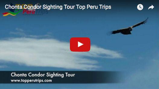Chonta Condor Sighting